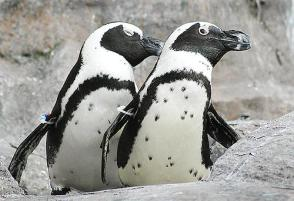 mystic penguins