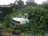 Kudzu in action