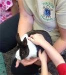 Truffle the Bunny