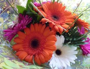 flowers-gerberas-from-dr