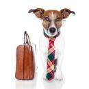TYDTWDay-Dog