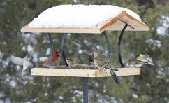 bird-feeder-winter